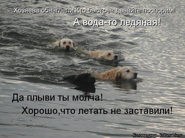Котоматрица: Хозяева обнаглели:Кто быстрее,давайте поспорим! А вода-то ледяная! Да плыви ты молча! Хорошо,что летать не заставили!