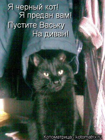 Котоматрица: Я черный кот! Я предан вам! Пустите Ваську  На диван!