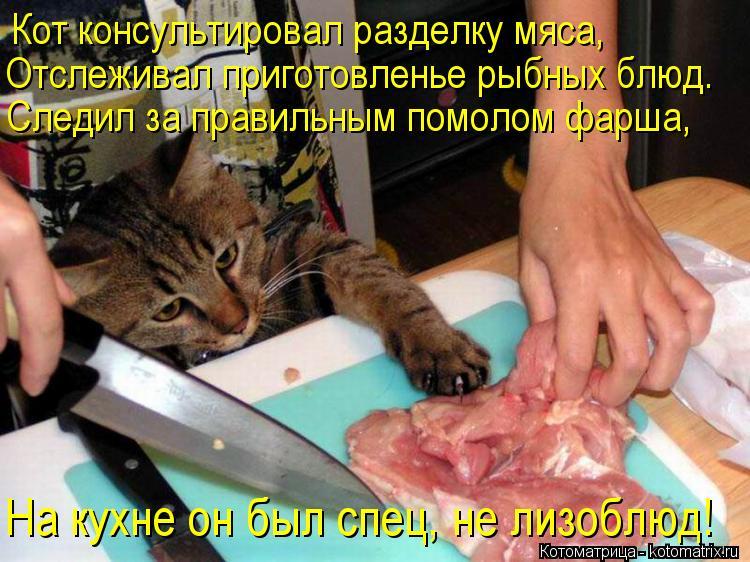 Котоматрица: Кот консультировал разделку мяса, Отслеживал приготовленье рыбных блюд. Следил за правильным помолом фарша, На кухне он был спец, не лизобл
