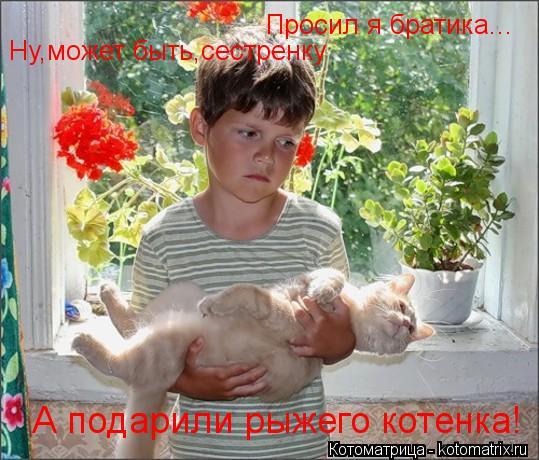 Котоматрица: Просил я братика... Ну,может быть,сестренку А подарили рыжего котенка!