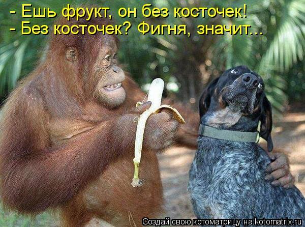 Котоматрица: - Ешь фрукт, он без косточек! - Без косточек? Фигня, значит...