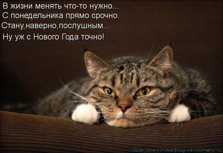 Котоматрица: В жизни менять что-то нужно... С понедельника прямо срочно. Стану,наверно,послушным... Ну уж с Нового Года точно!