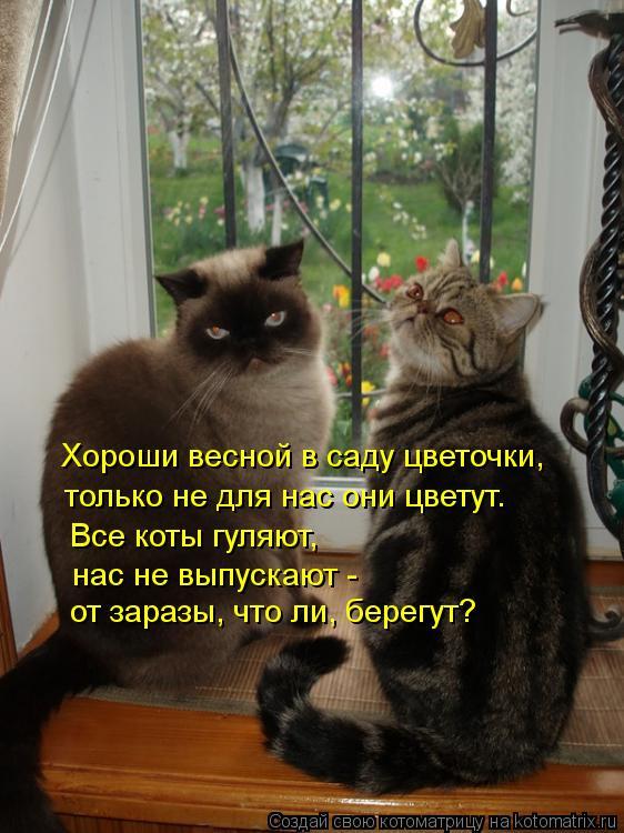 Котоматрица: Хороши весной в саду цветочки,  только не для нас они цветут. Все коты гуляют,  нас не выпускают - от заразы, что ли, берегут?