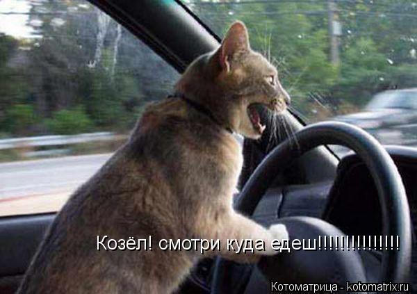 Котоматрица: Козёл! смотри куда едеш!!!!!!!!!!!!!!!