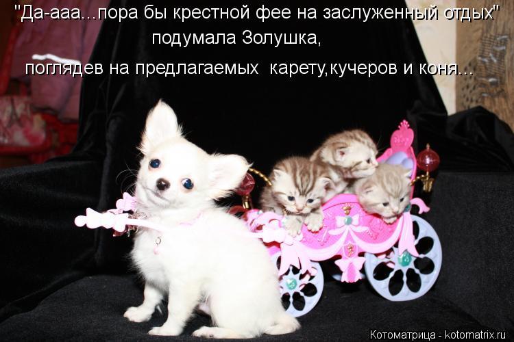 """Котоматрица: поглядев на предлагаемых  карету,кучеров и коня... """"Да-ааа...пора бы крестной фее на заслуженный отдых"""" подумала Золушка,"""