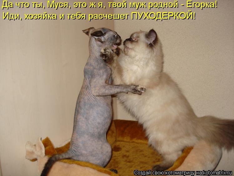 Котоматрица: Да что ты, Муся, это ж я, твой муж родной - Егорка! Иди, хозяйка и тебя расчешет ПУХОДЕРКОЙ!