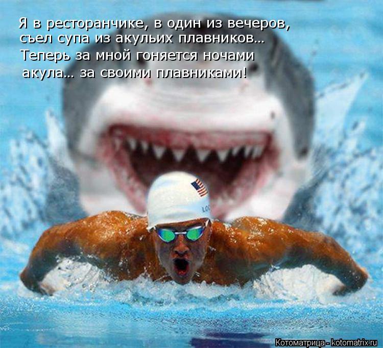 Котоматрица: Я в ресторанчике, в один из вечеров, съел супа из акульих плавников… Теперь за мной гоняется ночами  акула… за своими плавниками!