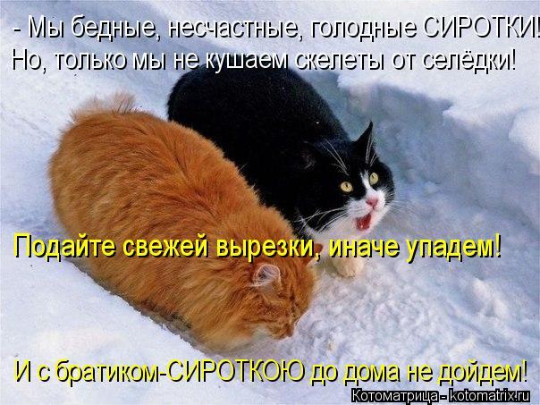 Котоматрица: - Мы бедные, несчастные, голодные СИРОТКИ! Но, только мы не кушаем скелеты от селёдки! Подайте свежей вырезки, иначе упадем! И с братиком-СИРО