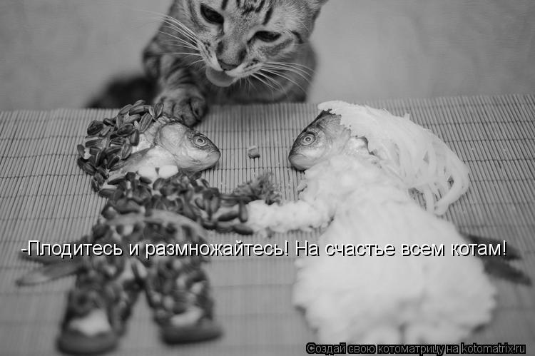 Котоматрица: -Плодитесь и размножайтесь! На счастье всем котам!