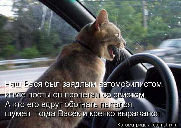 Котоматрица: Наш Вася был заядлым автомобилистом. И все посты он пролетал со свистом. А кто его вдруг обогнать пытался, шумел  тогда Васёк и крепко выража