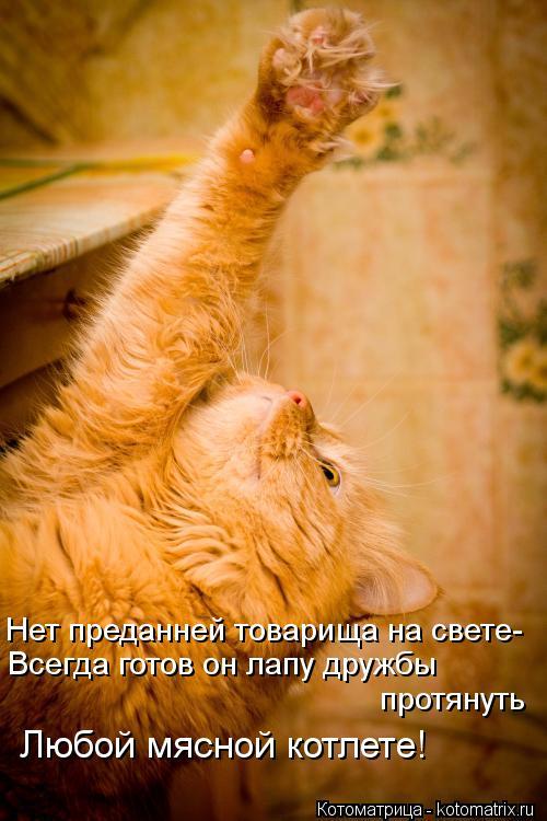 Котоматрица: Нет преданней товарища на свете- Всегда готов он лапу дружбы  протянуть Любой мясной котлете!
