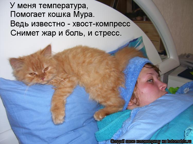 Котоматрица: У меня температура, Помогает кошка Мура. Ведь известно - хвост-компресс Снимет жар и боль, и стресс.