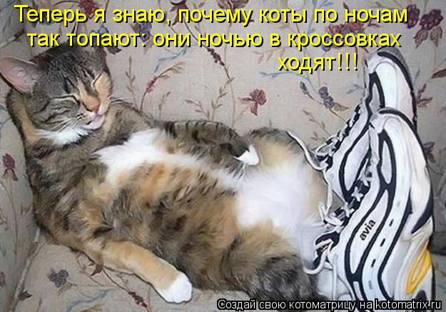 Котоматрица: Теперь я знаю, почему коты по ночам так топают: они ночью в кроссовках ходят!!!