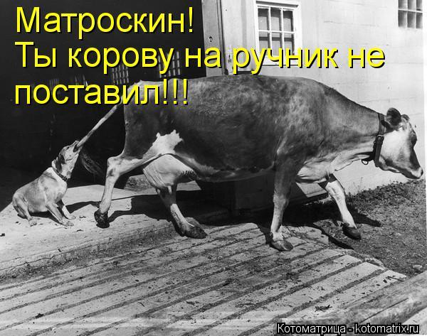 Котоматрица: Матроскин! Ты корову на ручник не поставил!!!