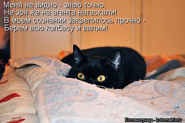Котоматрица: Меня не видно - знаю точно, Не зря же на агента натаскали! В моем сознании закрепилось прочно - Берем всю колбасу и валим!