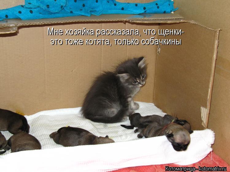 Котоматрица: Мне хозяйка рассказала, что щенки- это тоже котята, только собачкины