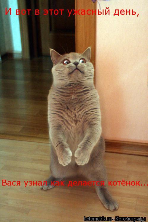 Котоматрица: И вот в этот ужасный день, Вася узнал как делается котёнок...
