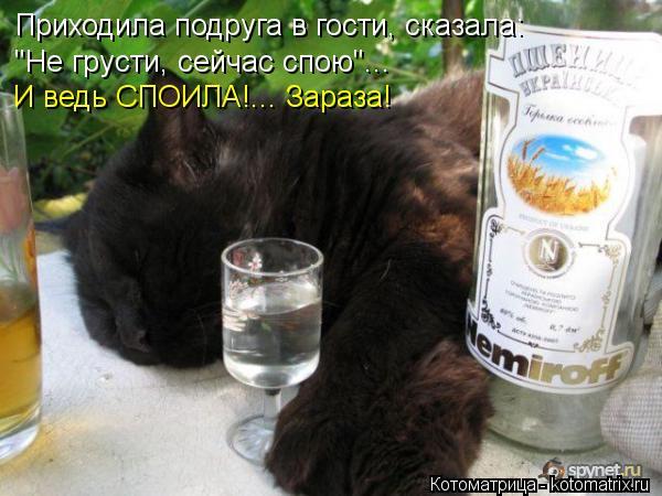 """Котоматрица: Приходила подруга в гости, сказала:  """"Не грусти, сейчас спою""""... И ведь СПОИЛА!... Зараза!"""