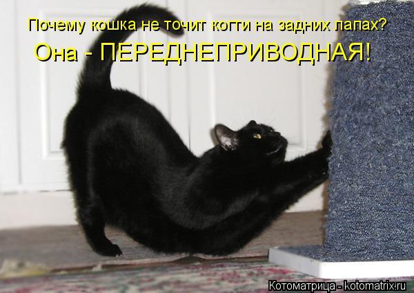 Котоматрица: Почему кошка не точит когти на задних лапах? Она - ПЕРЕДНЕПРИВОДНАЯ!