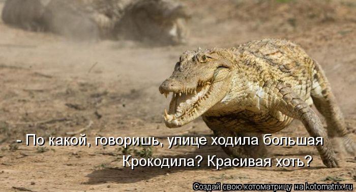 Котоматрица: - По какой, говоришь, улице ходила большая Крокодила? Красивая хоть?