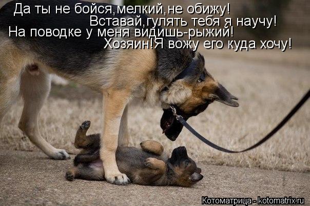 Котоматрица: Да ты не бойся,мелкий,не обижу! Вставай,гулять тебя я научу! На поводке у меня видишь-рыжий! Хозяин!Я вожу его куда хочу!