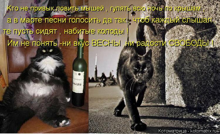 Котоматрица: Kто не привык ловить мышей , гулять всю ночь по крышам ,                а в марте песни голосить да так , чтоб каждый слышал . те пусть сидят , набитые