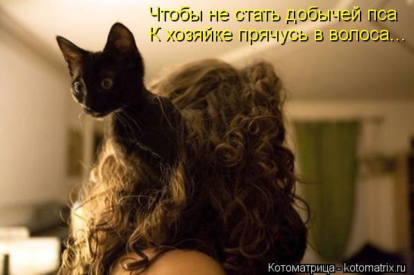 Котоматрица: Чтобы не стать добычей пса К хозяйке прячусь в волоса...