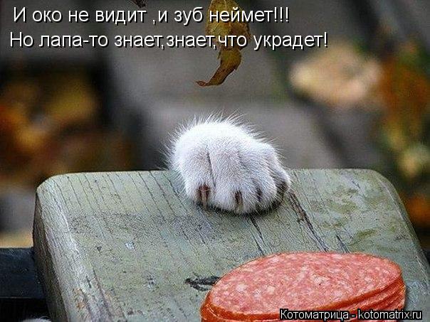 Котоматрица: И око не видит ,и зуб неймет!!! Но лапа-то знает,знает,что украдет!