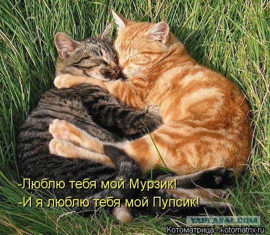 Котоматрица: -Люблю тебя мой Мурзик! -И я люблю тебя мой Пупсик!