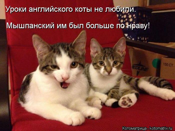Котоматрица: Уроки английского коты не любили. Мышпанский им был больше по нраву!
