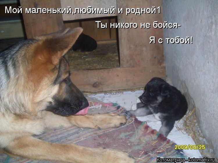 Котоматрица: Мой маленький,любимый и родной1 Ты никого не бойся- Я с тобой!