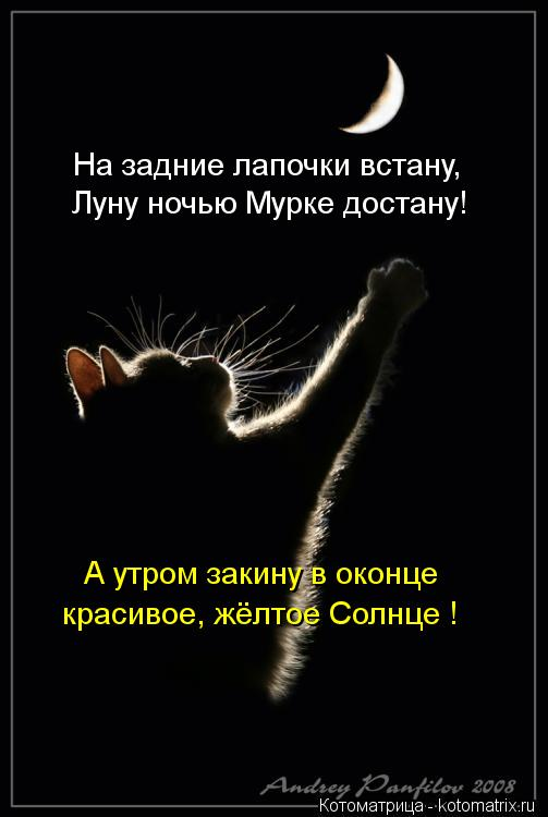Котоматрица: На задние лапочки встану, Луну ночью Мурке достану! А утром закину в оконце красивое, жёлтое Солнце !