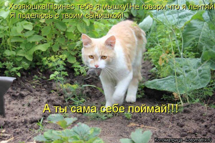 Котоматрица: Хозяюшка!Принес тебе я мышку! Не говори,что я лентяй! Я поделюсь с твоим сынишкой! А ты сама себе поймай!!!