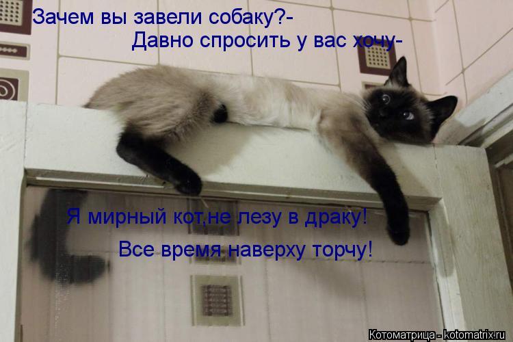 Котоматрица: Зачем вы завели собаку?- Давно спросить у вас хочу- Я мирный кот,не лезу в драку! Все время наверху торчу!