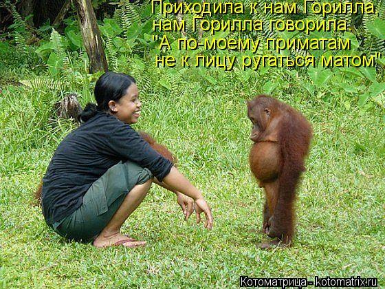 """Котоматрица: Приходила к нам Горилла, нам Горилла говорила: """"А по-моему приматам не к лицу ругаться матом"""""""
