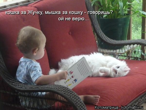 Котоматрица: кошка за Жучку, мышка за кошку - говоришь? ой не верю...