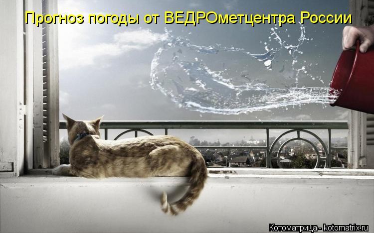 Котоматрица: Прогноз погоды от ВЕДРОметцентра России