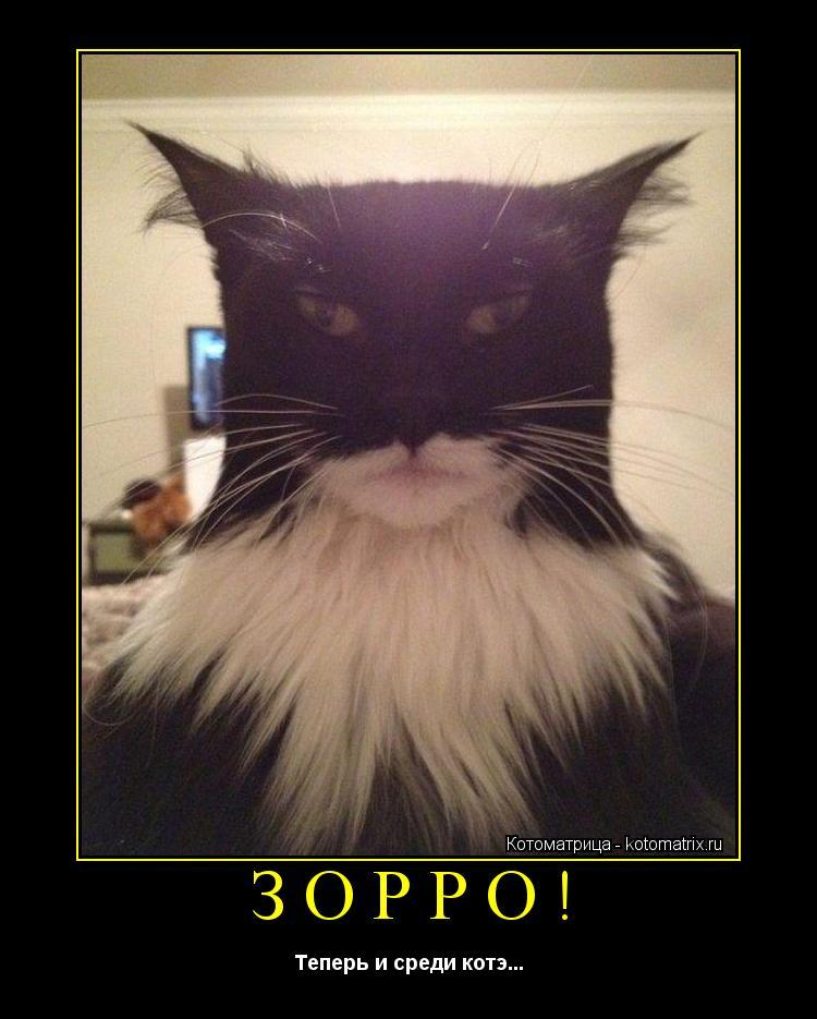 Котоматрица: ЗОРРО! Теперь и среди котэ...