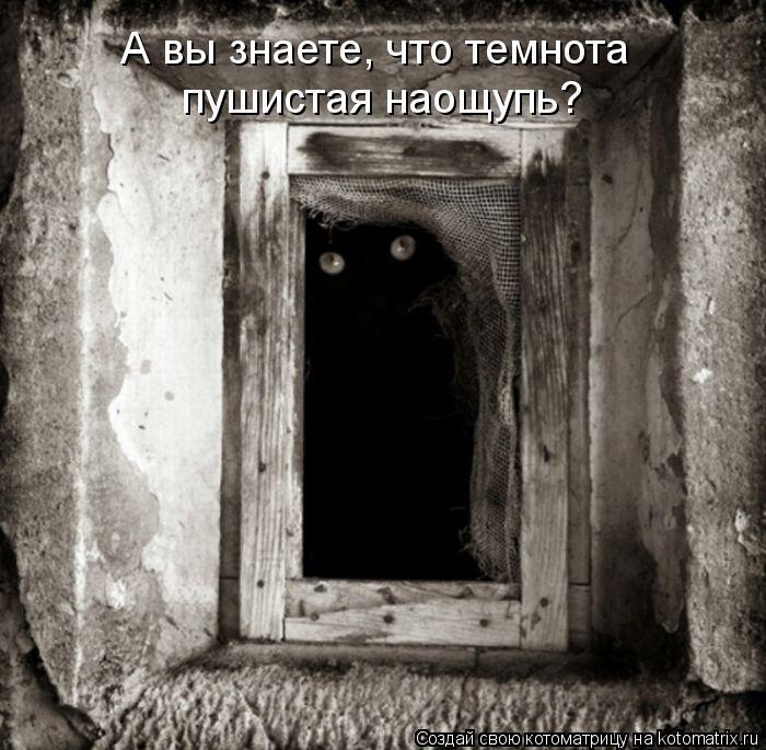 Котоматрица: А вы знаете, что темнота пушистая наощупь?