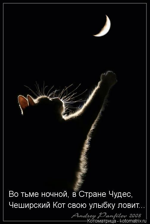 Котоматрица: Во тьме ночной, в Стране Чудес, Чеширский Кот свою улыбку ловит...
