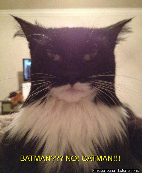 Котоматрица: BATMAN??? NO! CATMAN!!!