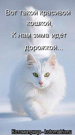 Котоматрица: Вот такой красивой  кошкой, К нам зима идёт дорожкой...