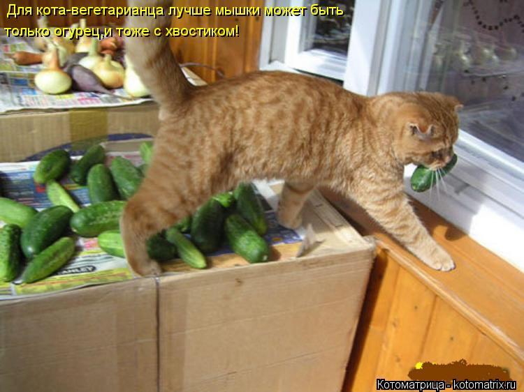 Котоматрица: Для кота-вегетарианца лучше мышки может быть  только огурец,и тоже с хвостиком!