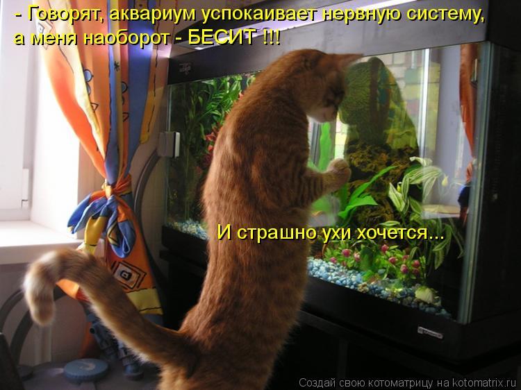 Котоматрица: И страшно ухи хочется... - Говорят, аквариум успокаивает нервную систему, а меня наоборот - БЕСИТ !!!