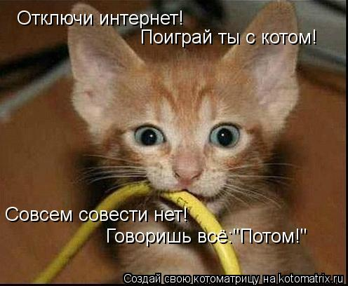 """Котоматрица: Отключи интернет! Поиграй ты с котом! Совсем совести нет! Говоришь всё:""""Потом!"""""""