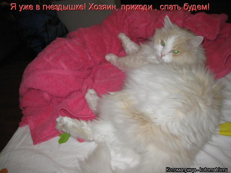 Котоматрица: Я уже в гнездышке! Хозяин, приходи , спать будем! Я уже в гнездышке! Хозяин, приходи , спать будем!