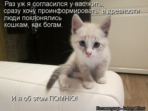 Котоматрица: Раз уж я согласился у вас жить, сразу хочу проинформировать: в древности люди поклонялись кошкам, как богам. И я об этом ПОМНЮ!