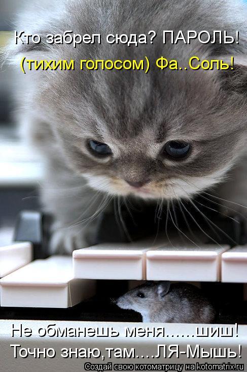 Котоматрица: Кто забрел сюда? ПАРОЛЬ!  (тихим голосом) Фа..Соль! Не обманешь меня......шиш! Точно знаю,там....ЛЯ-Мышь!