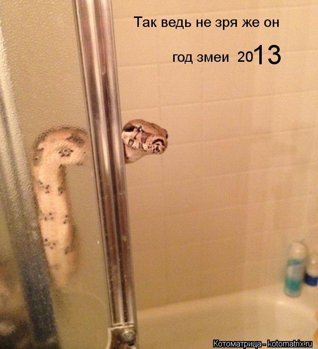 Котоматрица: Так ведь не зря же он год змеи  20 13
