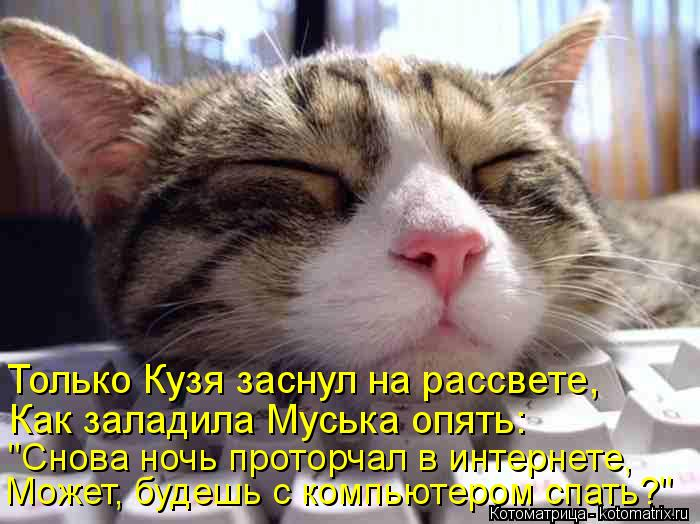 """Котоматрица: Только Кузя заснул на рассвете, Может, будешь с компьютером спать?"""" Как заладила Муська опять: """"Снова ночь проторчал в интернете,"""